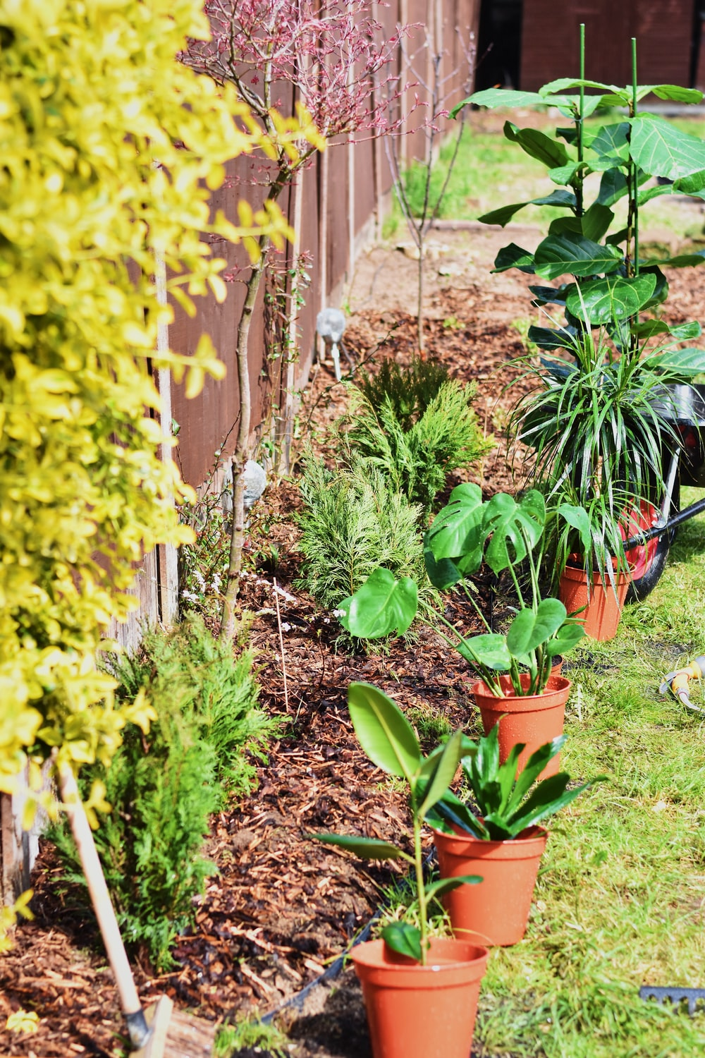 potted green plants on garden
