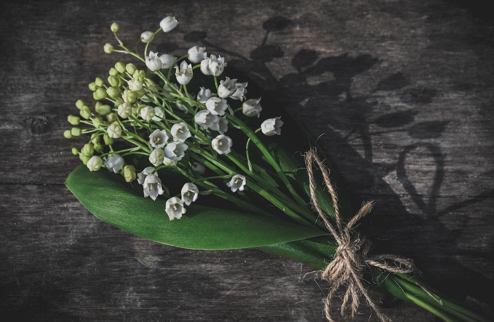 white-petaled flowers bouquet