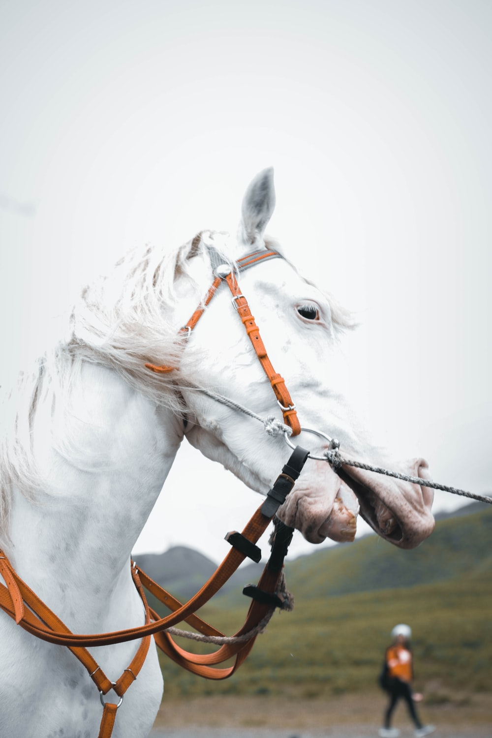 white horse wearing yellow harness