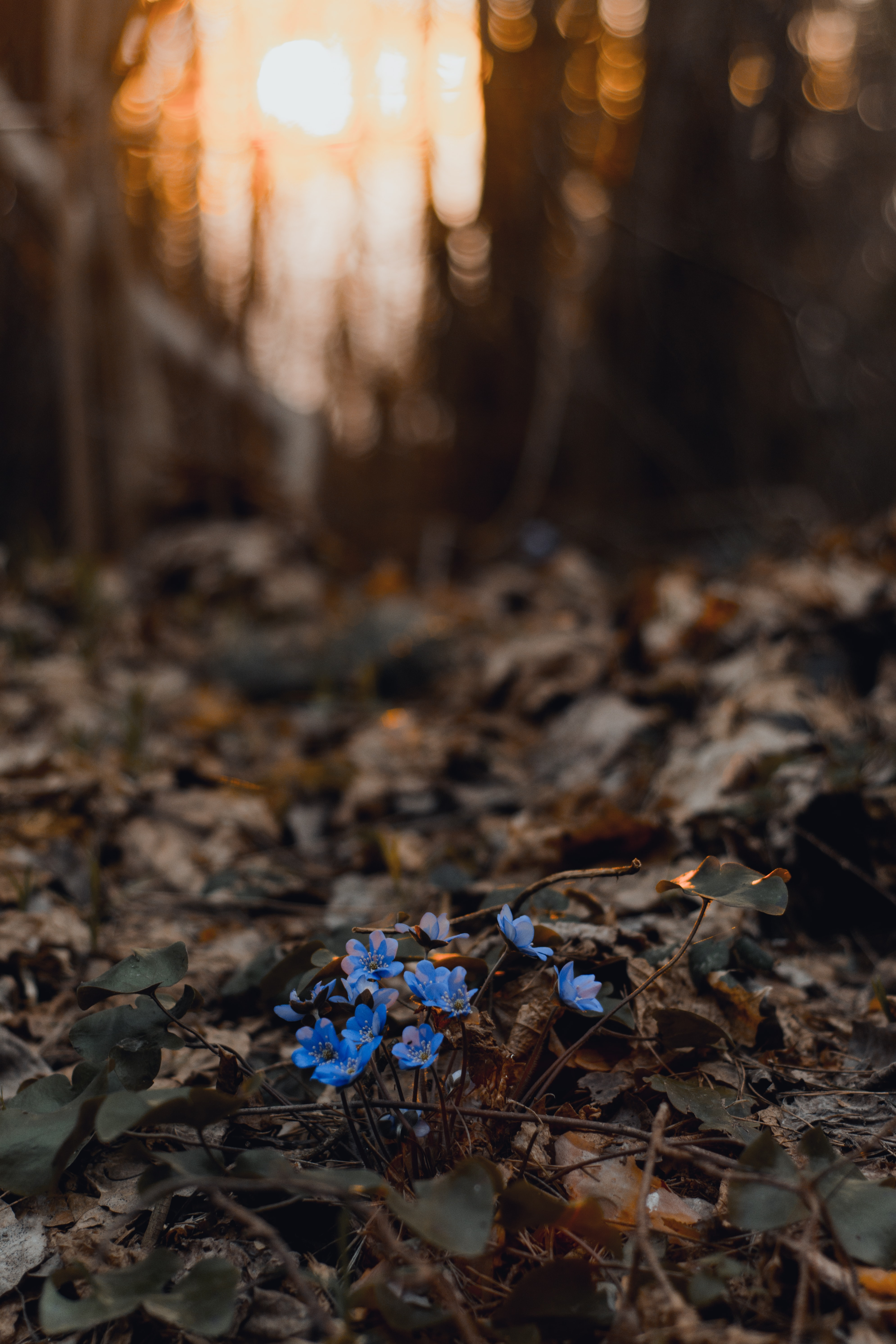 selective focus photography of blue-petaled flower