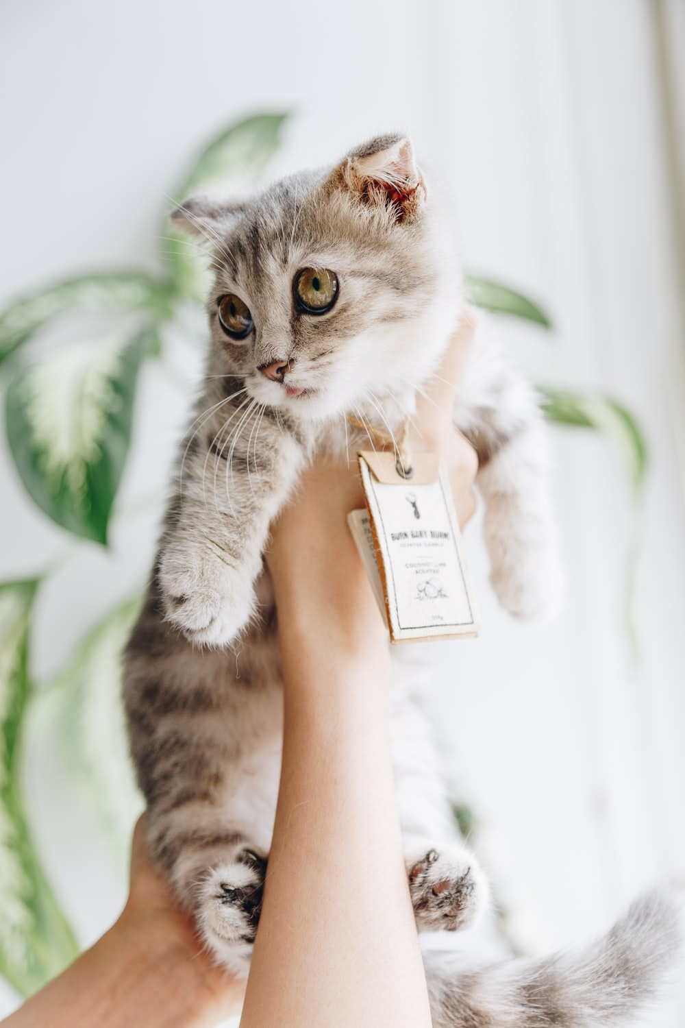 person holding cat