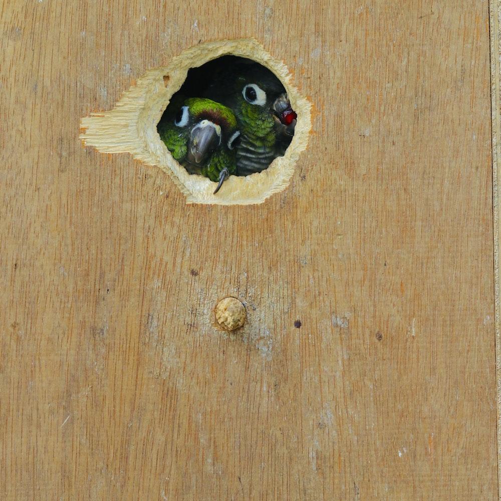 green bird inside brown wooden board