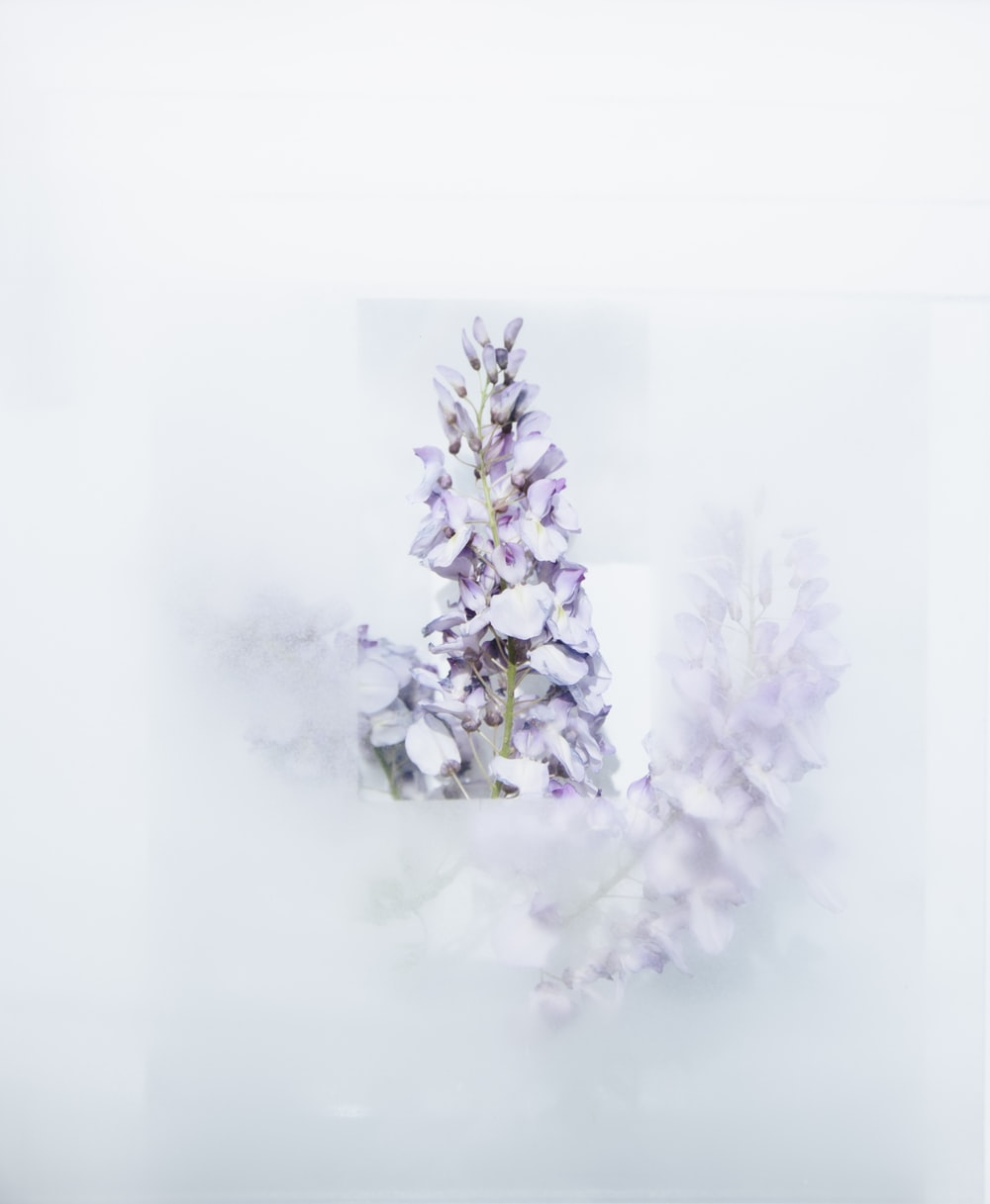 plant with snow photography
