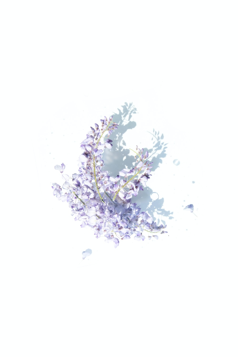 purple and gray graphic