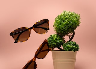 two brown sunglasses beside green-leafed plant