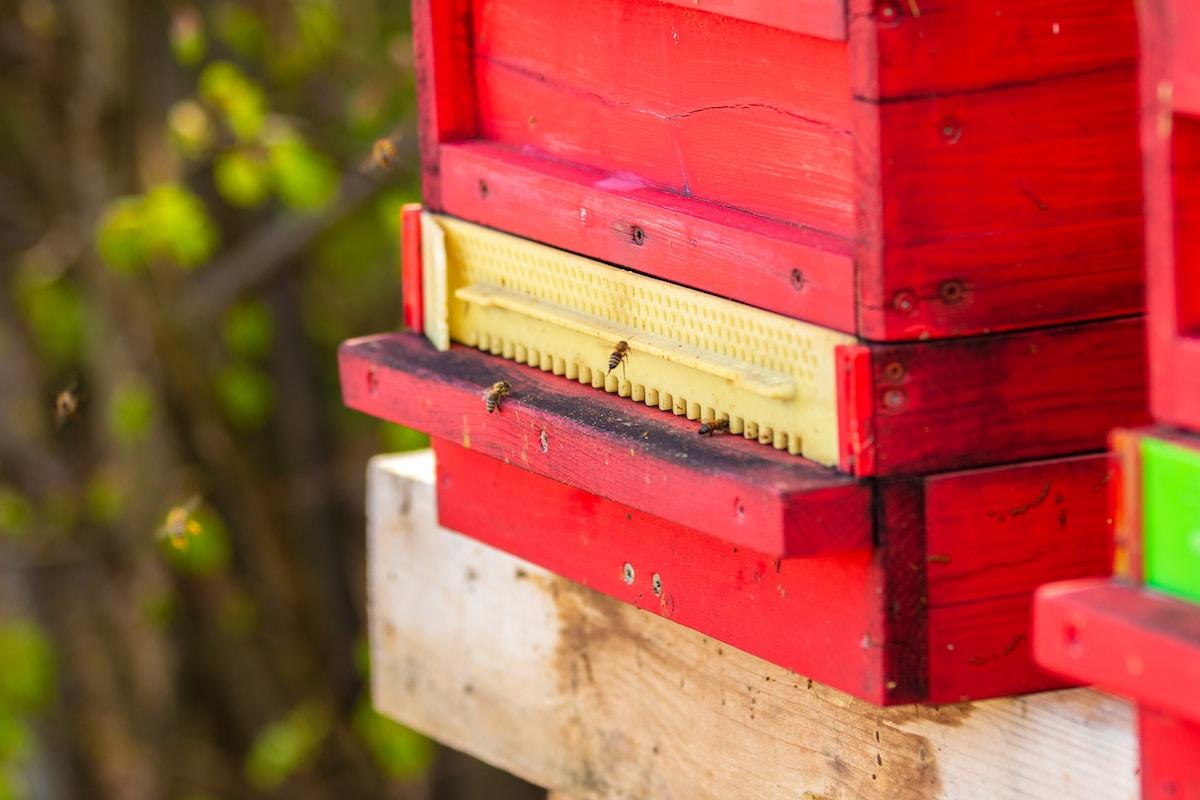 Meliponini Raw Stingless Bee Honey