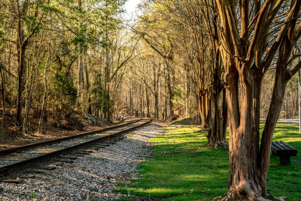tall brown and green trees beside train railway