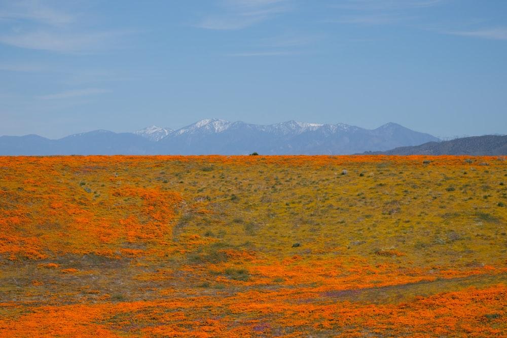 orange and green grass field