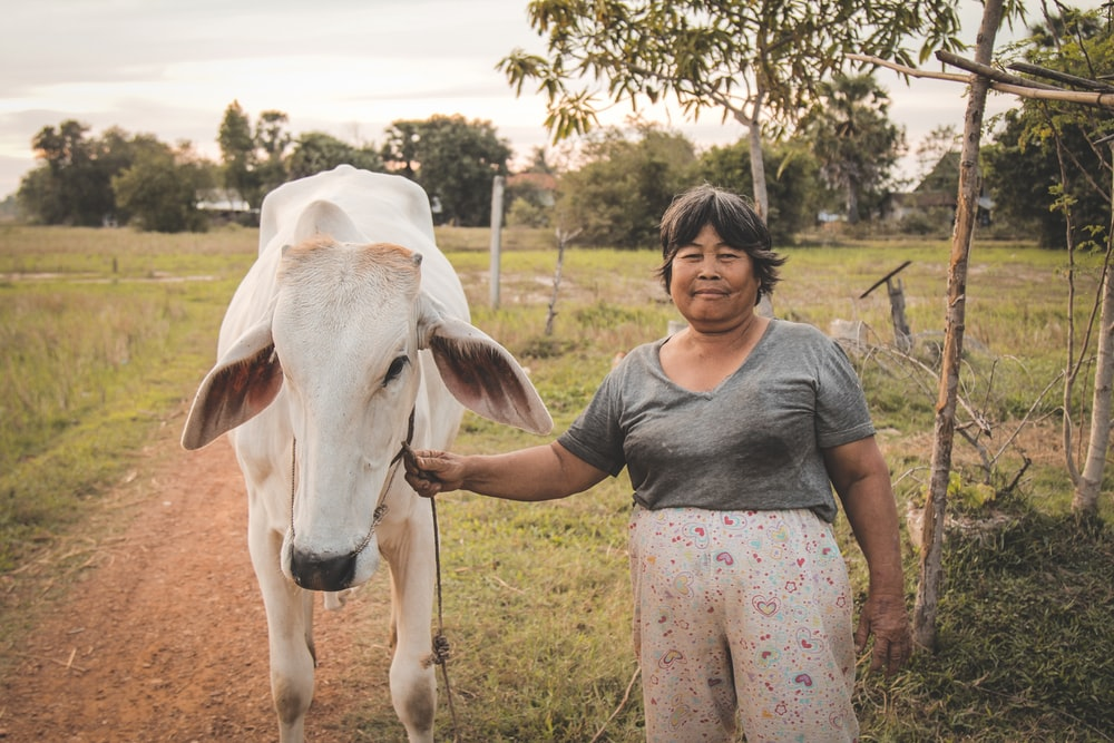 man holding rope on cow