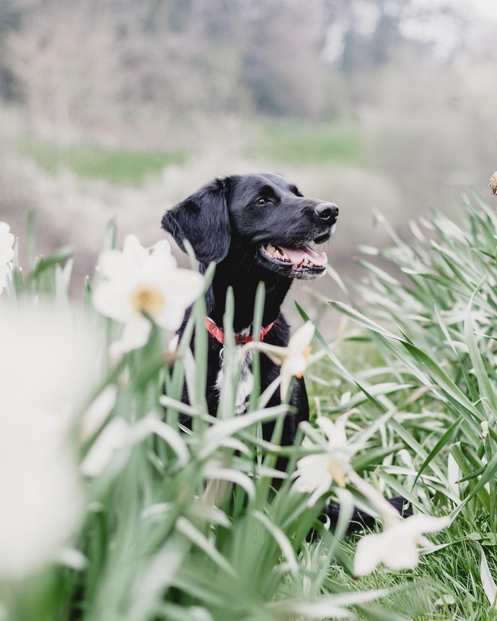 black dog behind plants