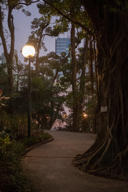 lighted street light near pathway
