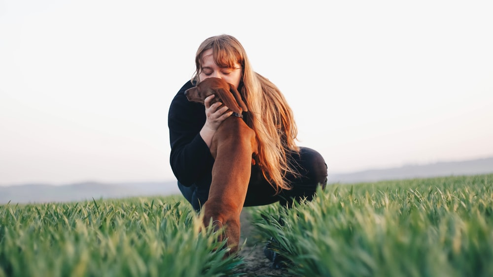 woman kissing adult brown dachshund