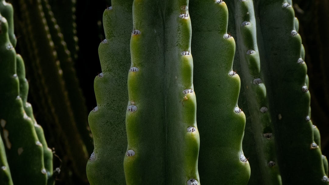 I love cactus. This beauty grows in my yard and is the subject of many lens tests.