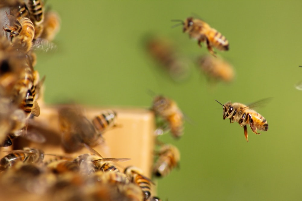 group of bee