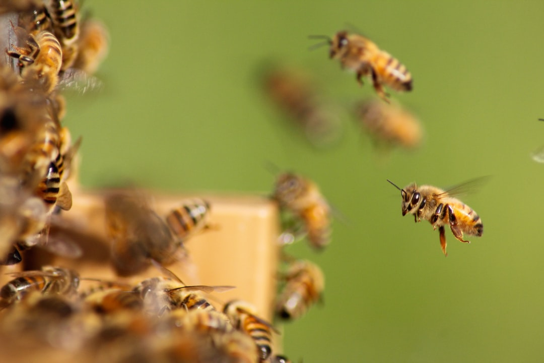 A beehive full of energy, which harvests the nectar on the rapeseed. This announces the arrival of spring honey