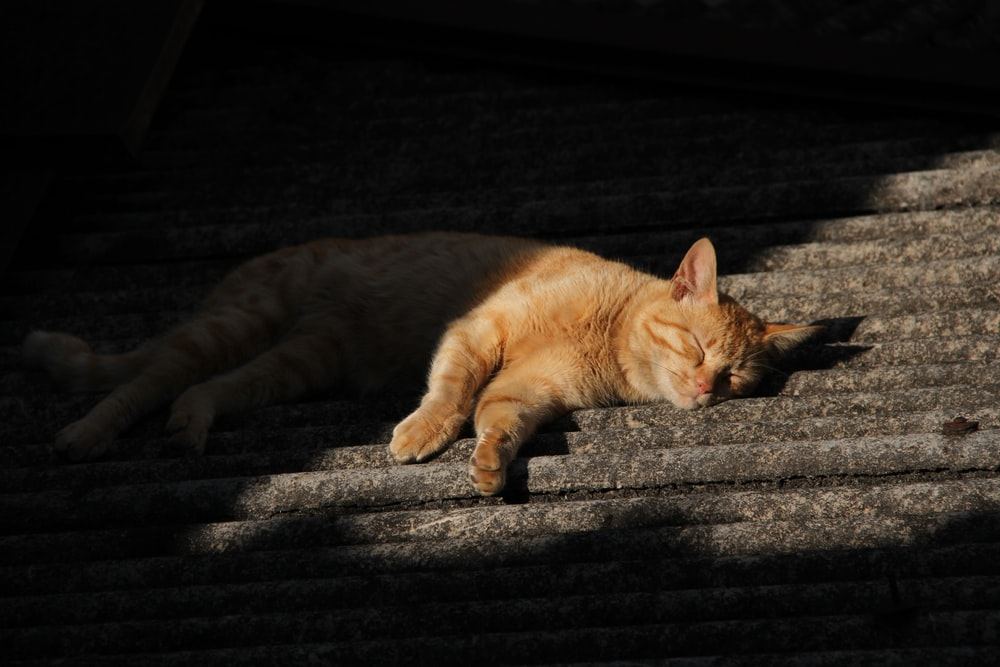 orange tabby cat lying on stair