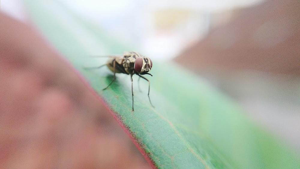 bottle fly perched on leaf