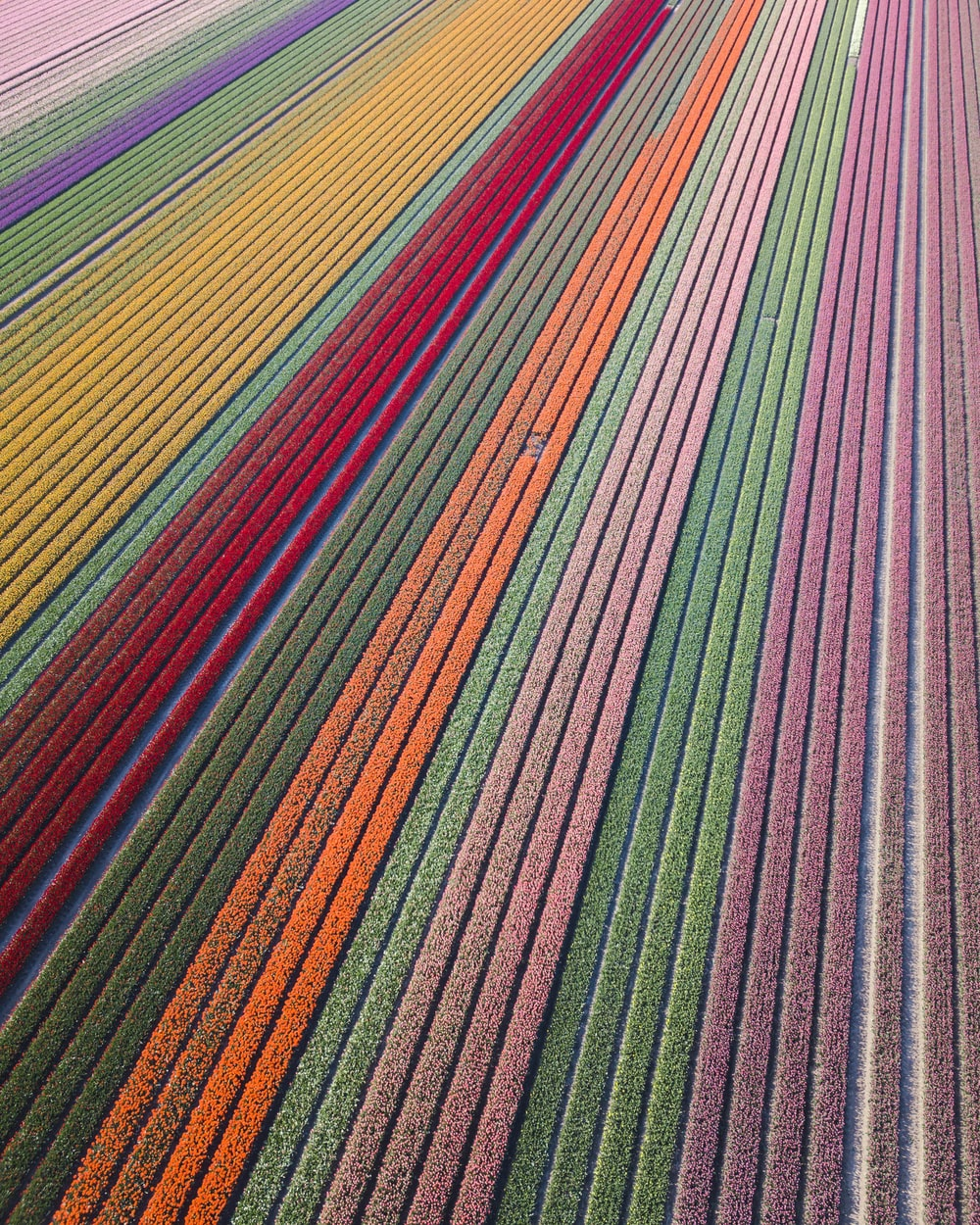 assorted-color flower field