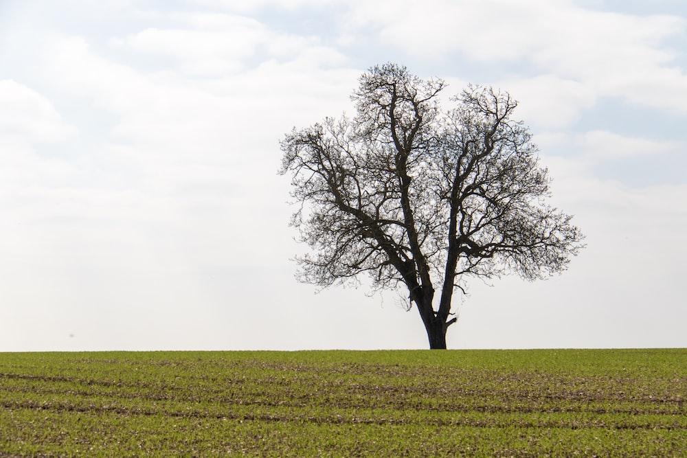 tree on open grass field under white sky