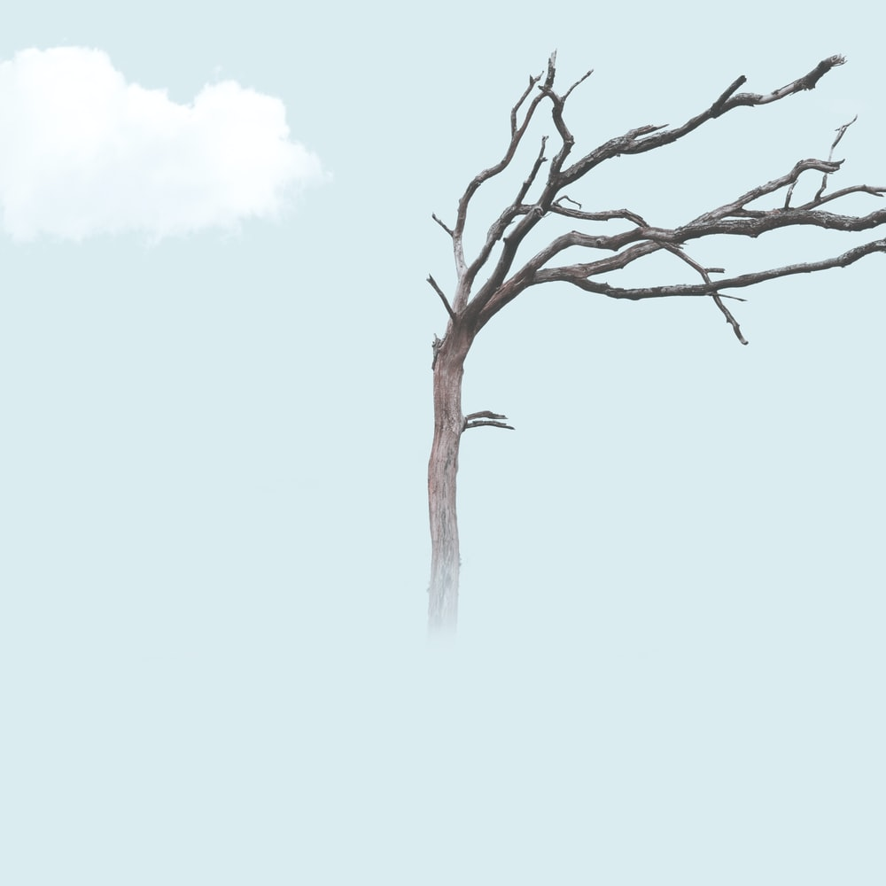 brown bare tree illustration