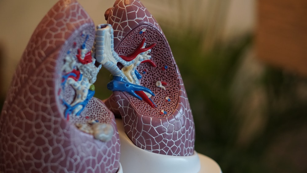 selective focus photography of anatomy lungs
