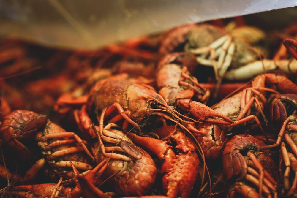 brown shrimps