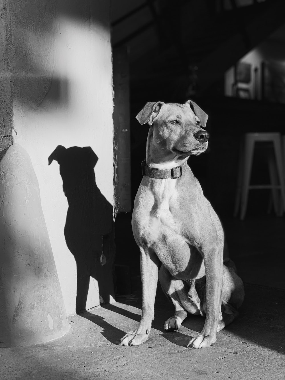 grayscale photography of dog