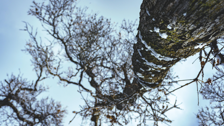 low angle photo of tall tree