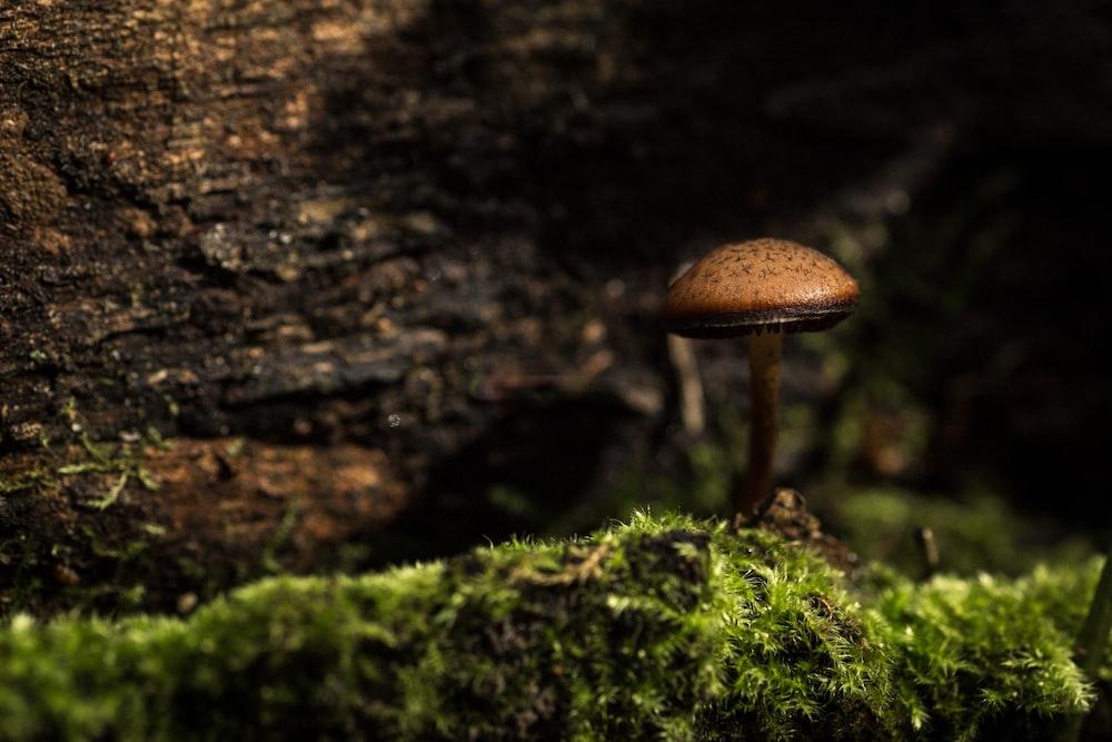 selective focus photo of brown mushroom