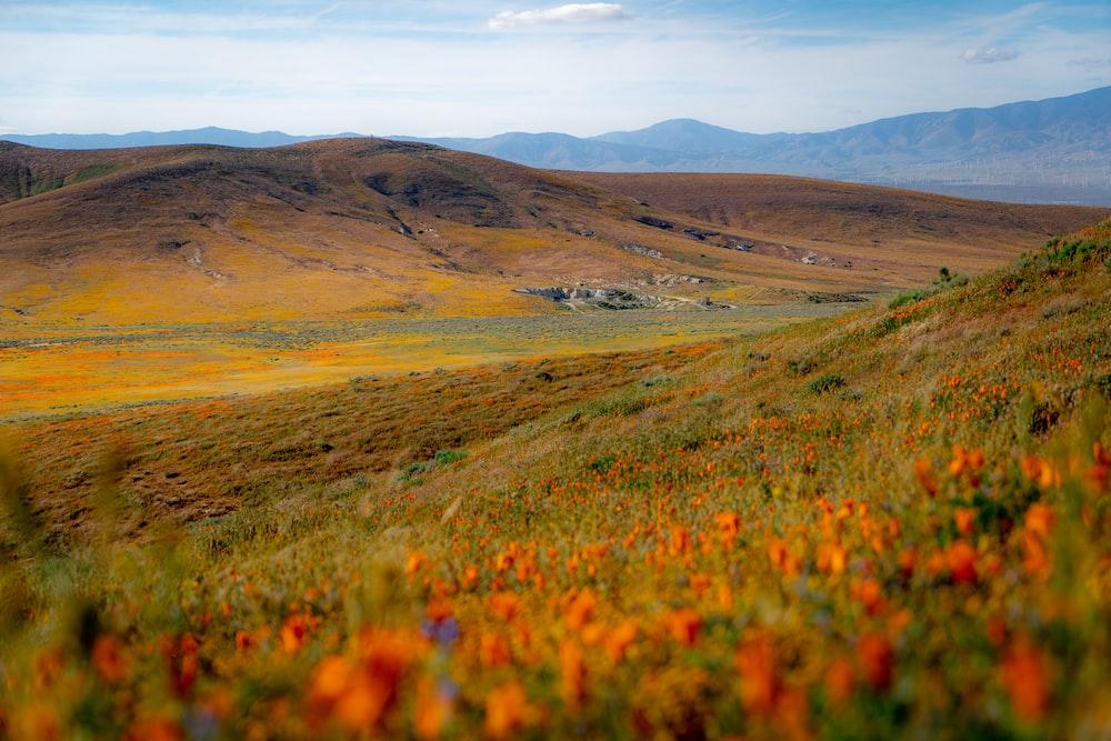 orange flowers green field