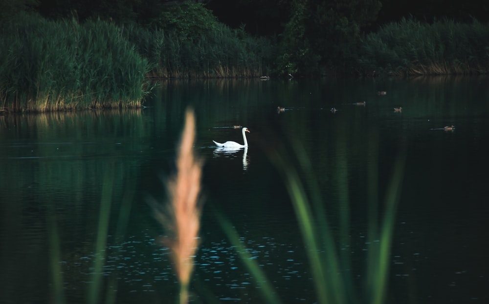 swan near plant during daytime