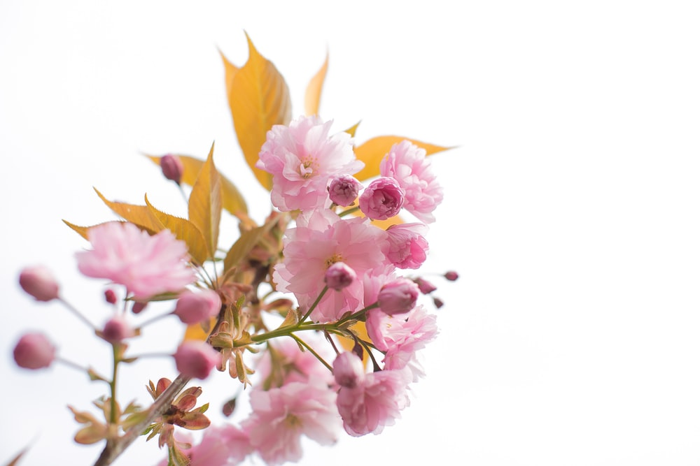 pink-petal flower