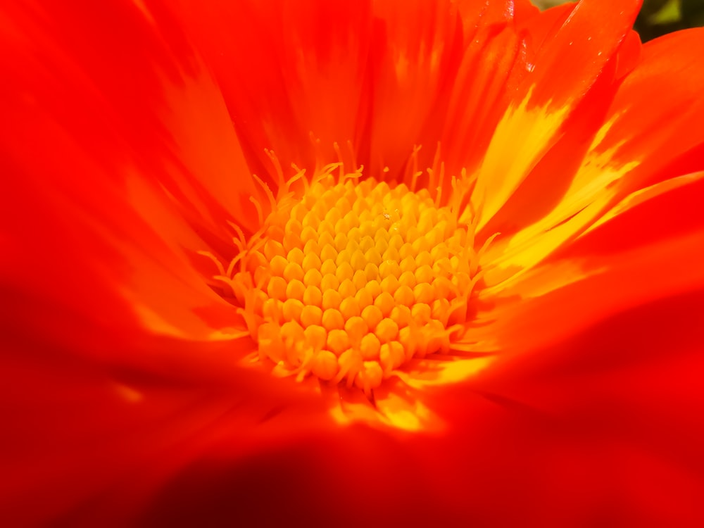 micro-photography of red petaled flower
