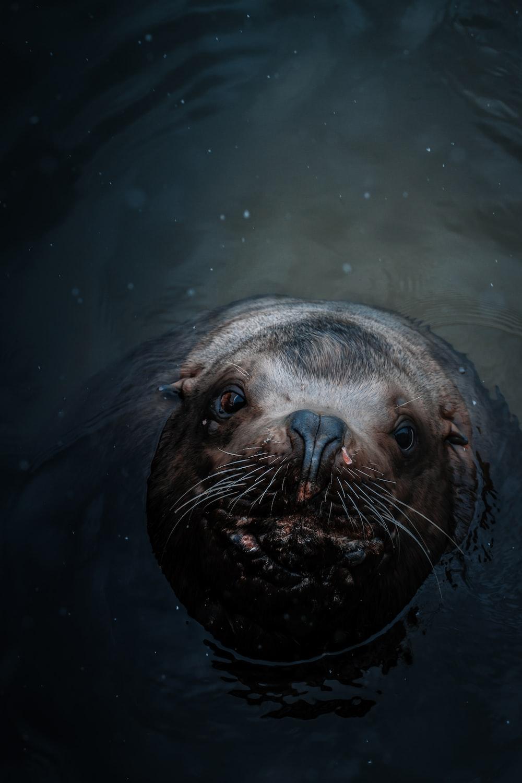 gray animal on water