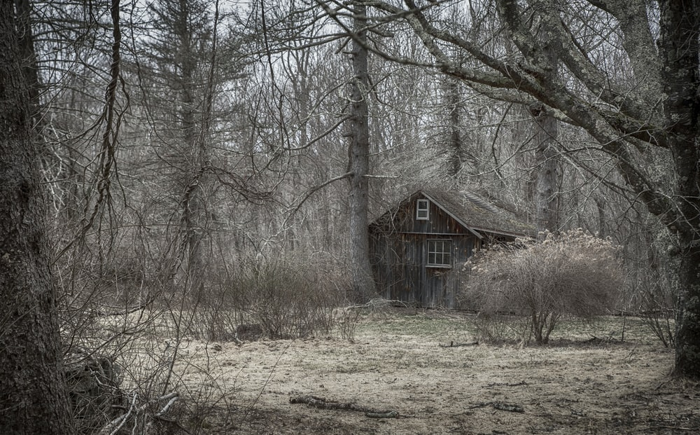 brown house near at forest trees