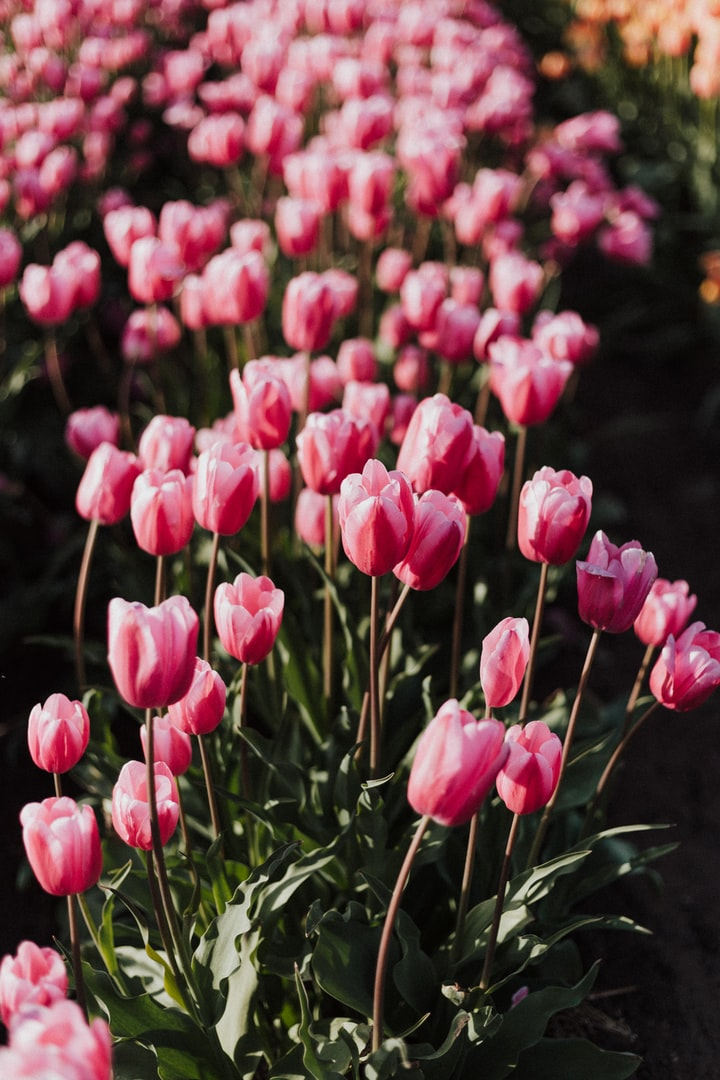 Zen And The Art Of Spring Bulb Gardening