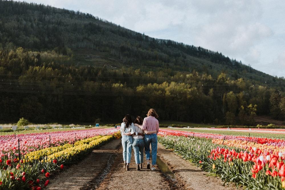 people walking near red flowers during daytime