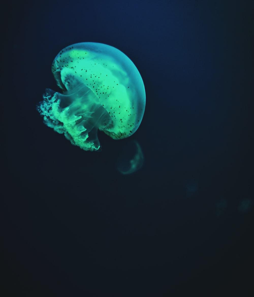 gray jellyfish