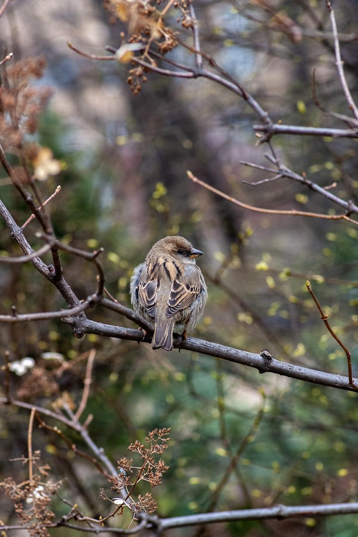 brown bird perching on twig