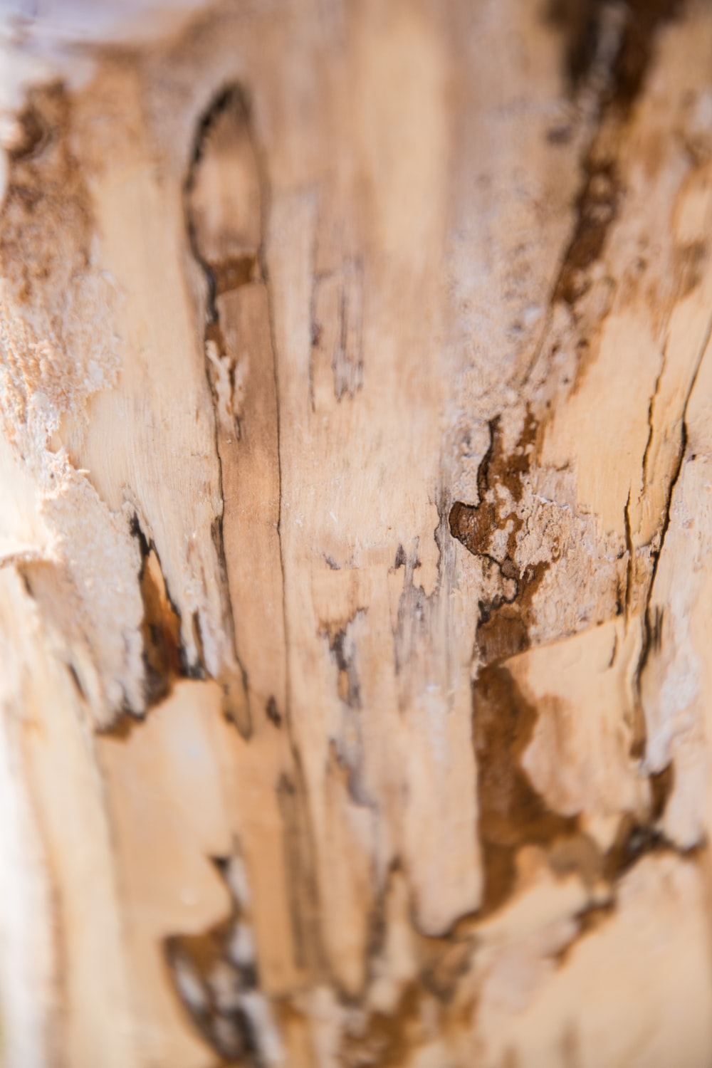 Pest Infestation - Termites