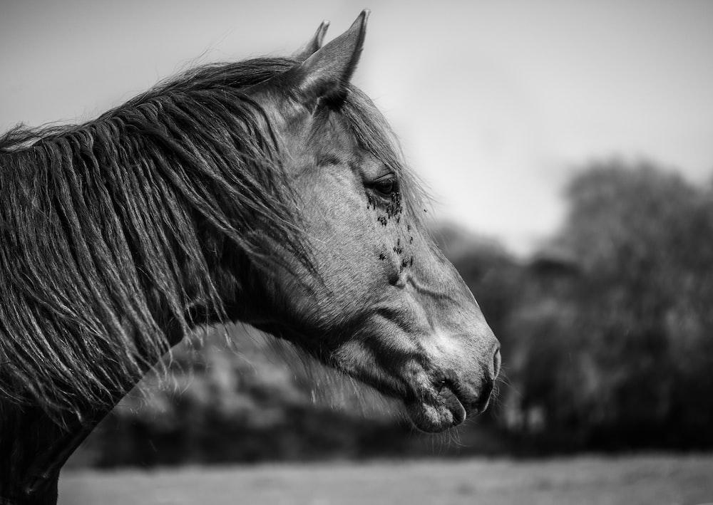 greyscale photo of horse
