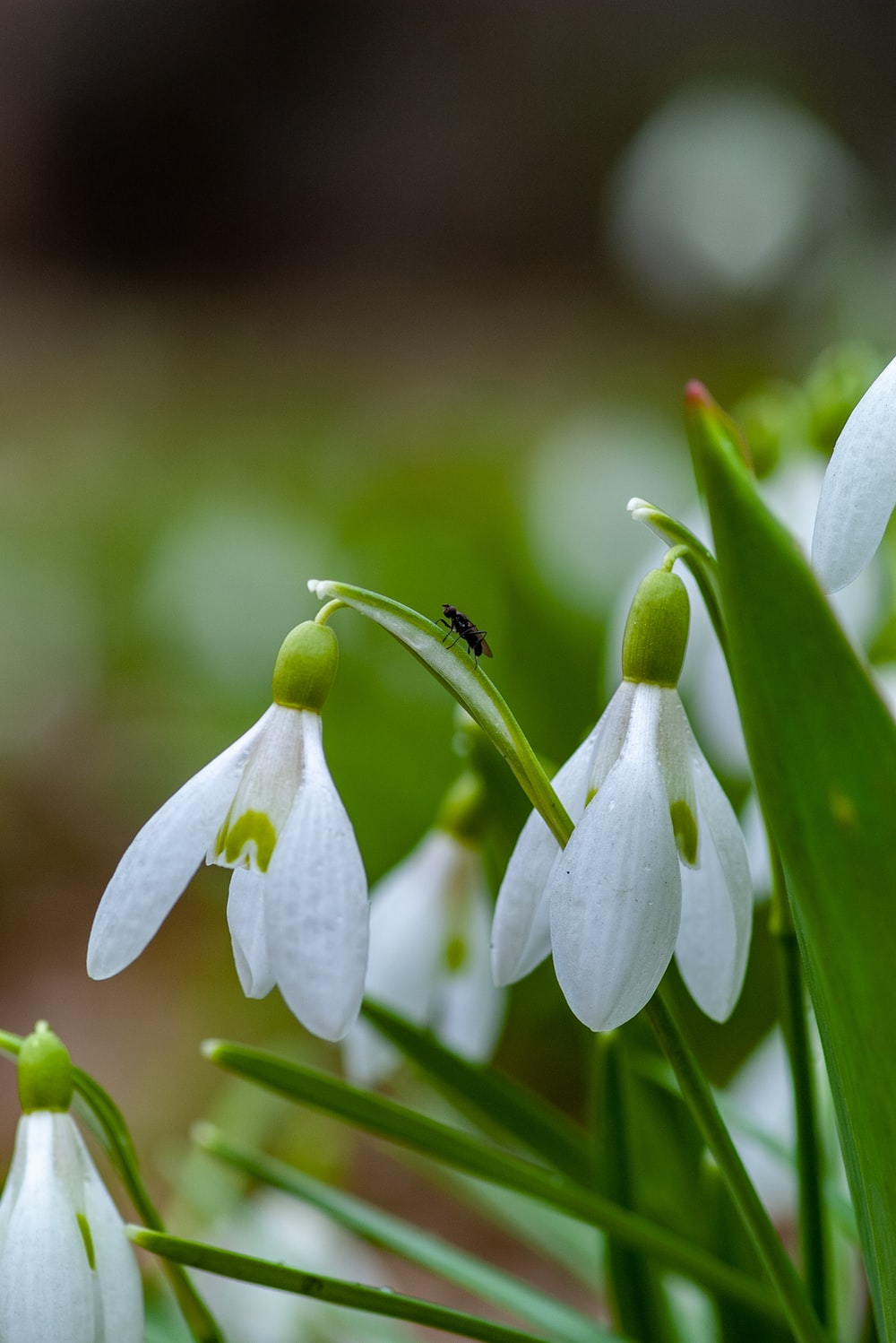 selective focus photography white flowers