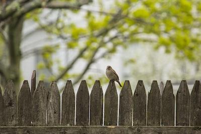 gray bird perching on fence