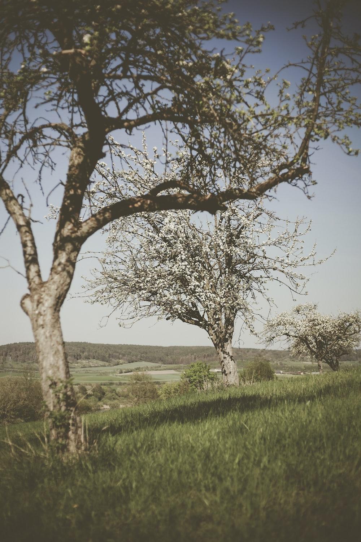 trees on grass field