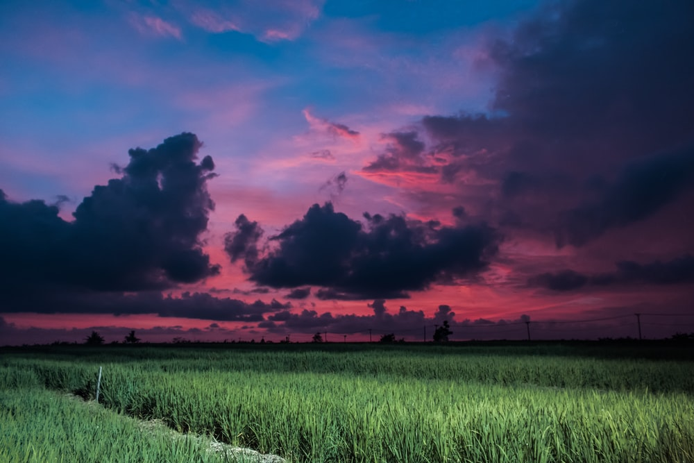 green rice field under black and orange skies