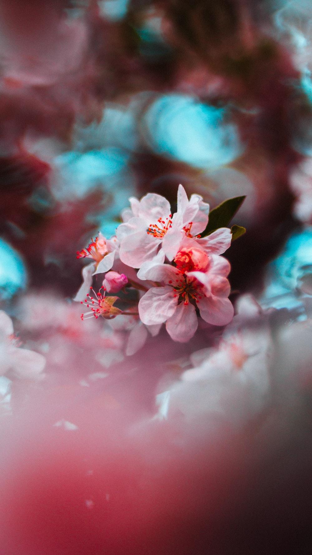 pink flowering tree in bloom