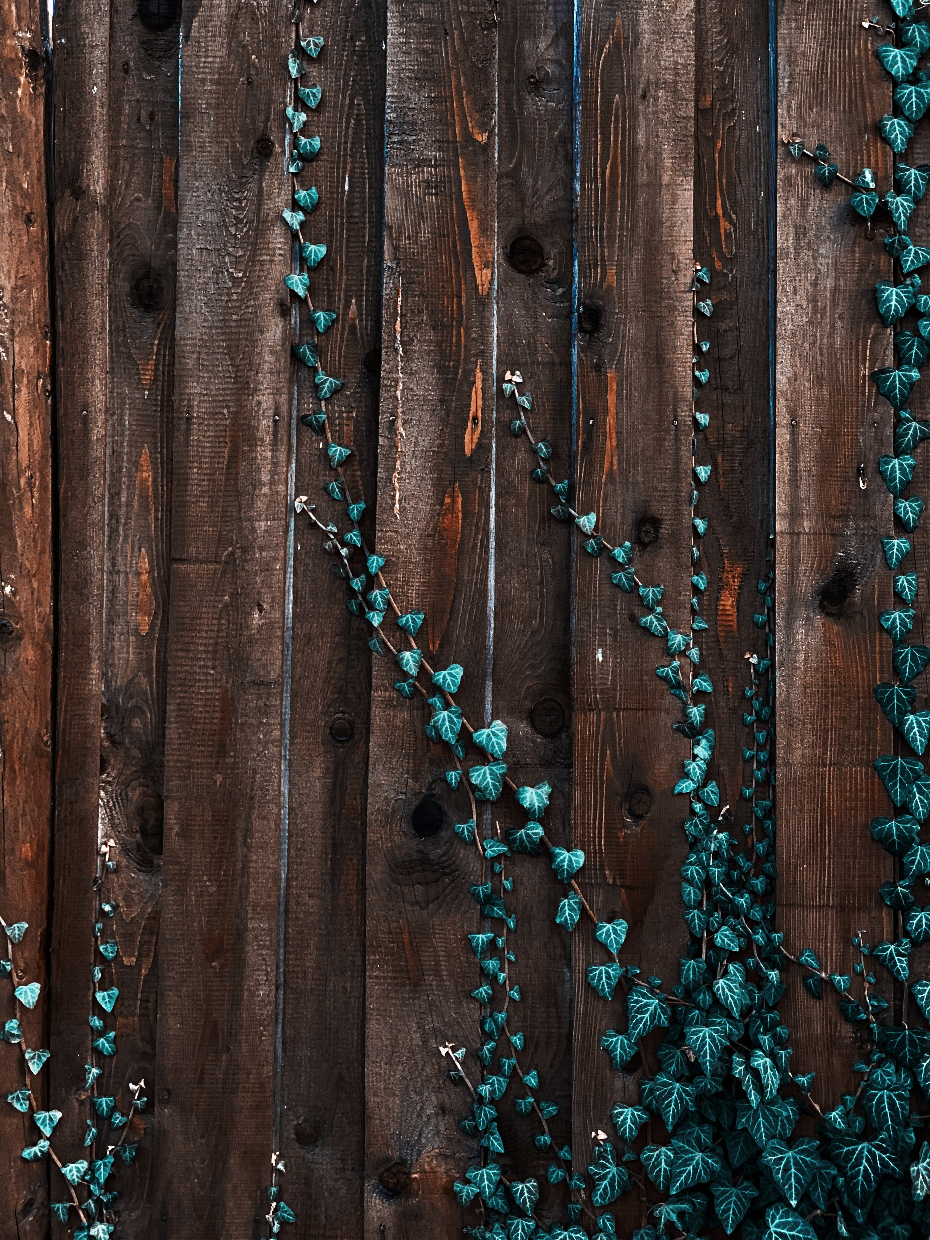 green ivy plant on brown wooden plank