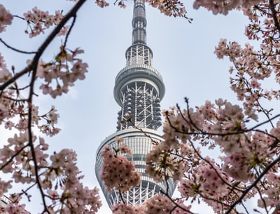 view of white metal tower through cherry blossom tree structure teams background