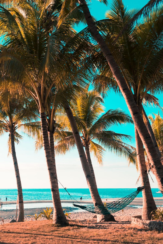 coconut trees on sea