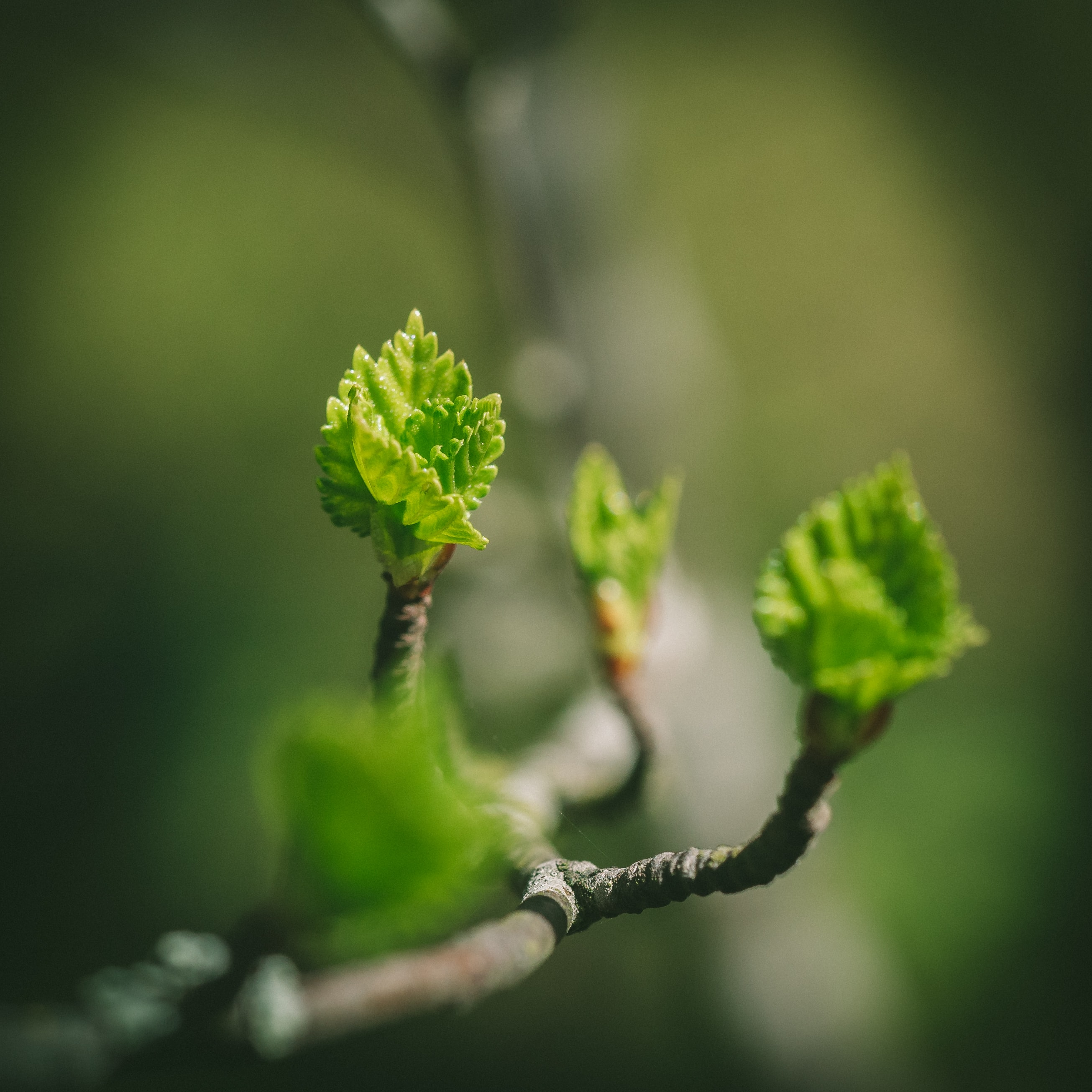 selective focus photography of tree branch